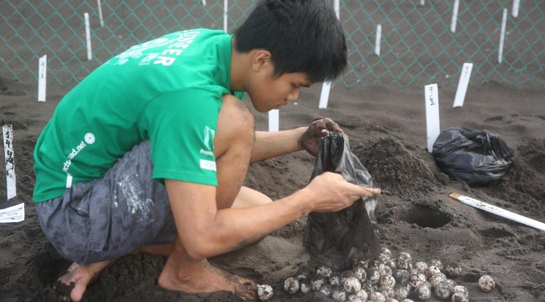 Een natuurbehoud vrijwilliger op groepsreis in Mexico verplaatst schildpad eieren.